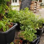 Čerstvá zelenina na pražském sídlišti