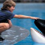 Co se stalo se slavnými filmovými zvířaty?