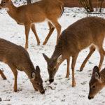 Můžeme pomoct zvířátkům vzimě?