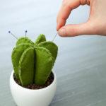 Kaktusový jehelníček