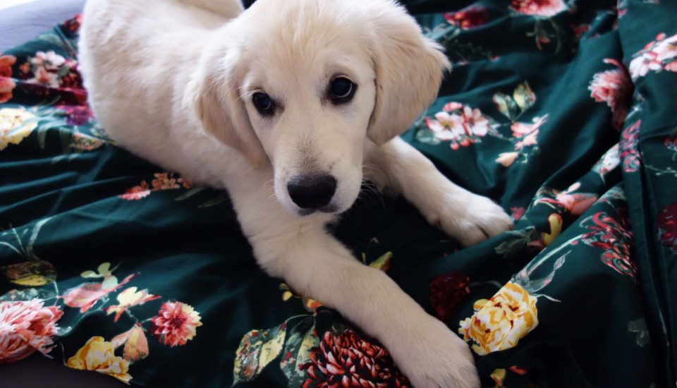 Patří domácí mazlíčci do postele?