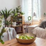 Jak dostat do domova více zelené (azeleně)