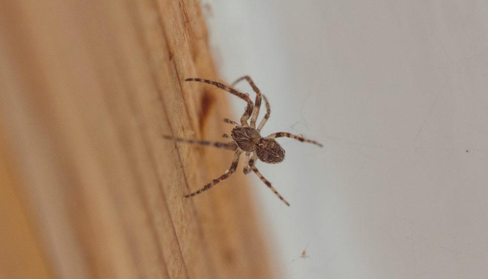 Válka proti pavoukům. Jak vyhnat pavučiny zkaždého kouta?
