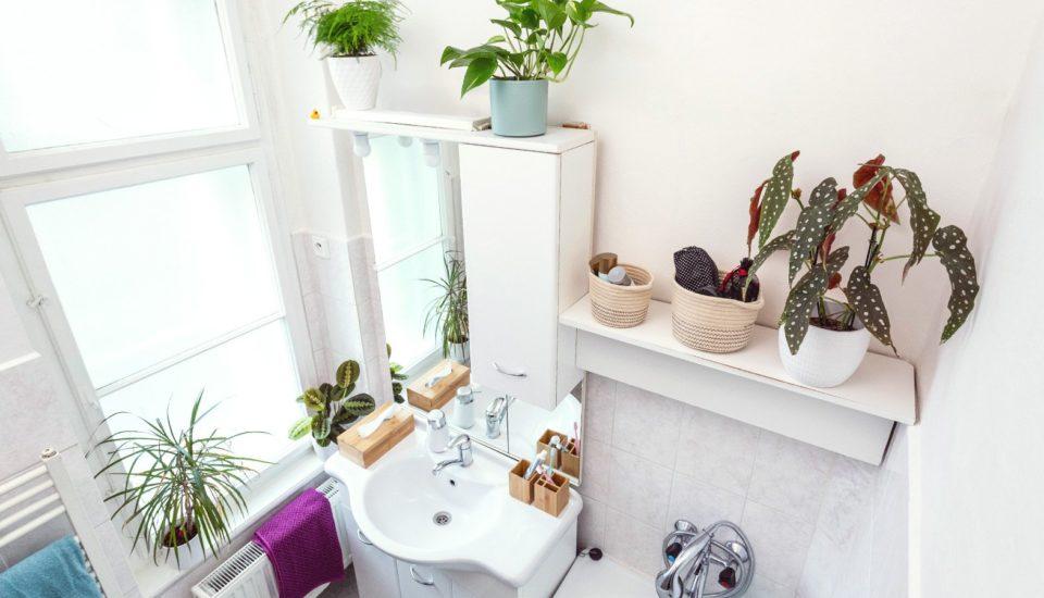 Nejlepší místo pro pokojové rostliny? Koupelna!