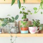 Inspirujte se: co všechno můžete použít místo květináče?