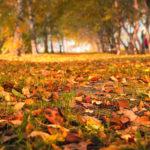 Proč mám zpodzimu upřímnou radost