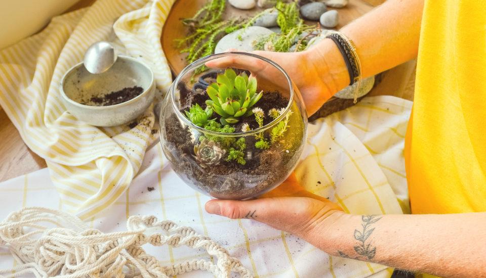 Pokojovek vkvětináčích už mám spoustu. Teď tvořím rostlinná terária!
