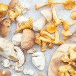 Recept na houbový burger atipy (nejen) na mobilní aplikace pro houbaře