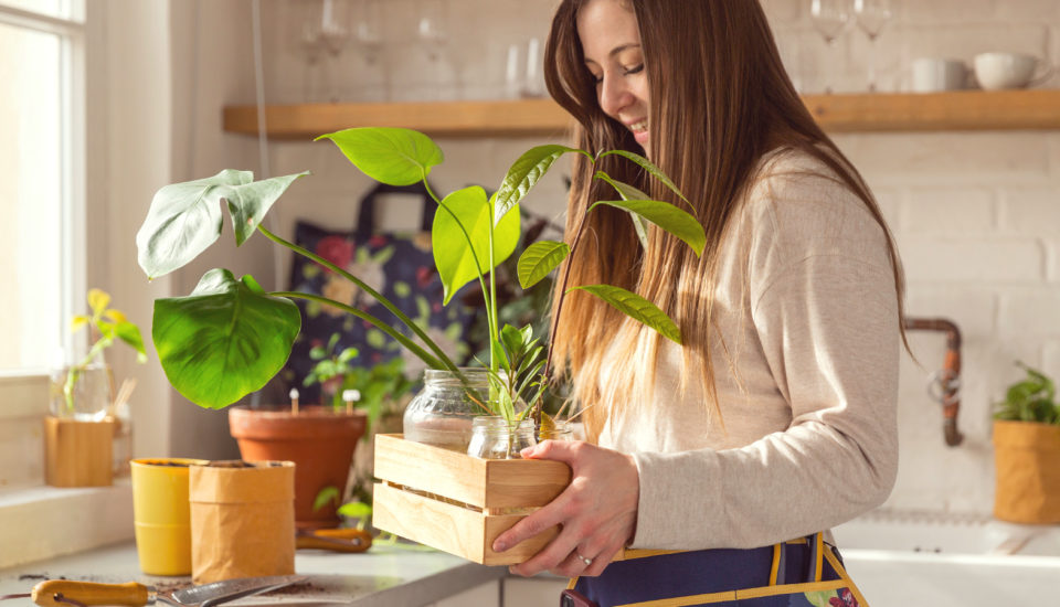 Tipy na správné množení pokojovek apěstování nových rostlin třeba zpecky citronu