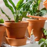 Přišlo jaro apokojové rostliny si žádají hnojení adostatečné zalévání. Víte, jak na to?