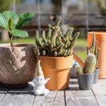 Letnění pokojovek aneb vypusťte rostliny na léto ven