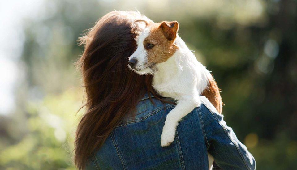 Seznam věcí, na které se musíte připravit, než adoptujete psa zútulku