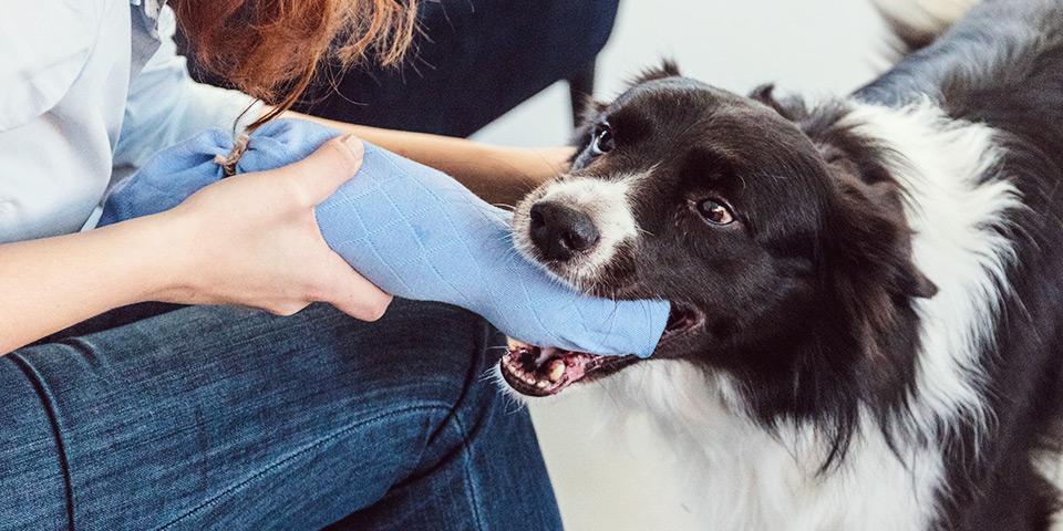 Chrastící psí hračka, kterou jednoduše vyrobíte sami