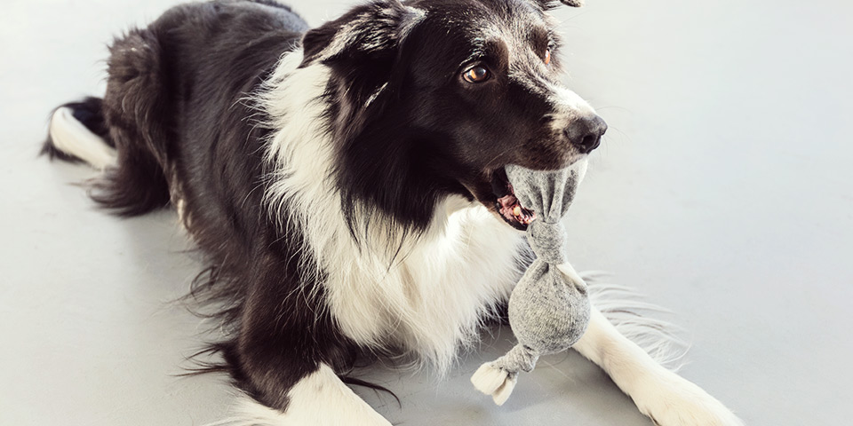 Jednoduchá psí hračka: dvojitý míček