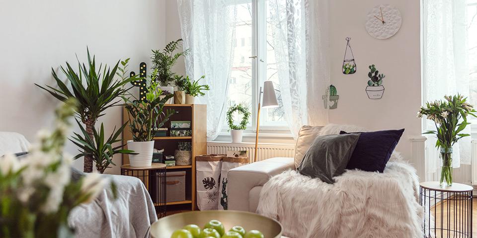 Zelený kout v bytě tvořený květinami a zelenými dekoracemi